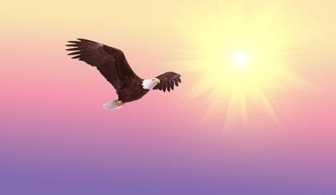bald-eagle-521492__340[1]